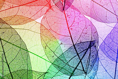 Poster Squelette décoratif de lame Multicolor decorative skeleton leaves