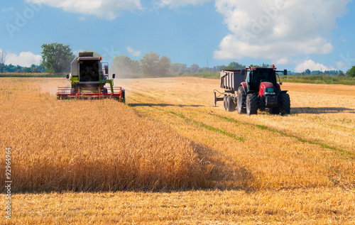 Harvester combine and tractor harvesting wheat on sunny summer day плакат