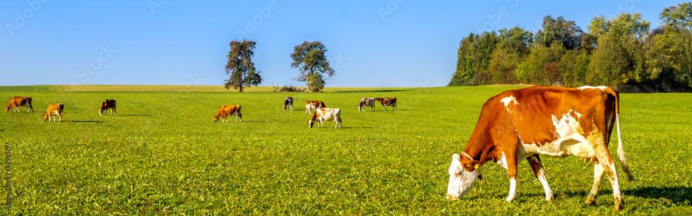 Fototapety, obrazy: Milchkühe auf der Wiese