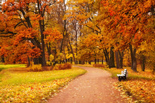 Colorful Autumn Trees In Park