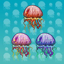 Three Color Spotted Jellyfish