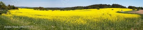 Poster Jaune Panoramic view of flowering field of rapeseed