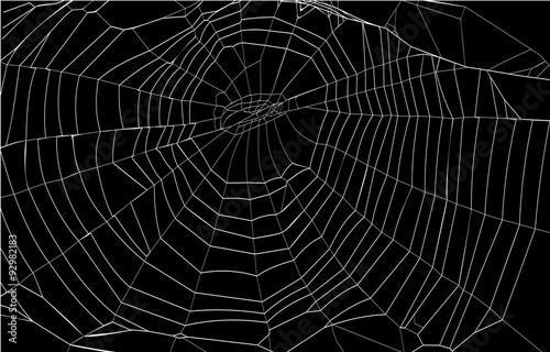 Fotografie, Obraz silhouette spiderweb