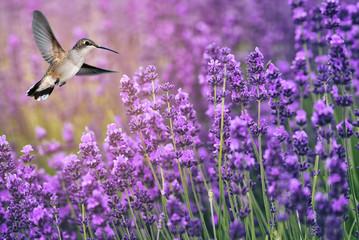 Obraz na SzkleHummingbird feeding on wild flowers
