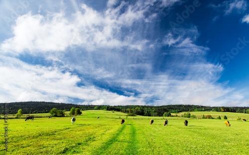 obraz dibond Himmel über der Weide