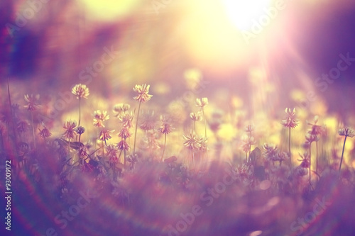 Spoed Foto op Canvas Snoeien summer landscape background sun flowers Rays