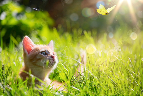Fotografie, Tablou  art Young cat / kitten hunting a ladybug with Back Lit