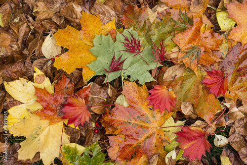 Keuken foto achterwand Rood traf. Colorful background of fallen autumn leaves
