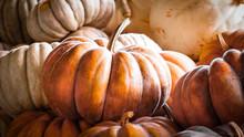 Pumpkins #1