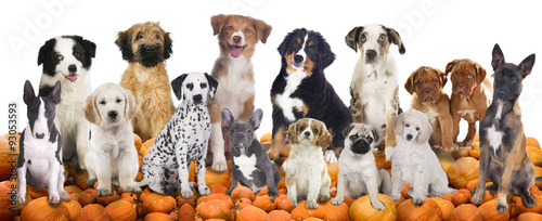Photo  Big group of dogs sitting on pumpkins