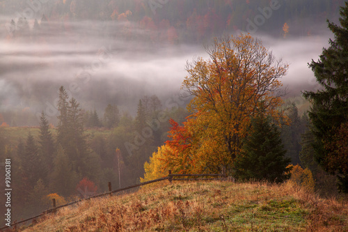 Fototapety, obrazy: Morning mist in mountain woodland.