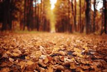 Autumn Landscape In Nature