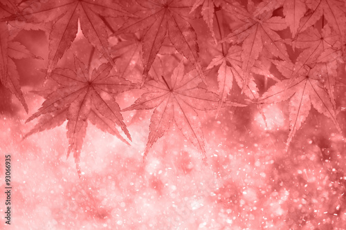 Blurred magical marsala color autumn maple leaves in the rain. Lovely sunny and rainy autumn season leaves with copy space background. Selective focus used.