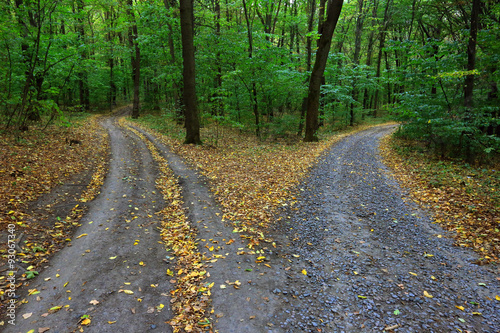 Garden Poster Road in forest fork roads