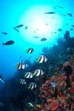 Fototapeta Do akwarium - モルディブの海