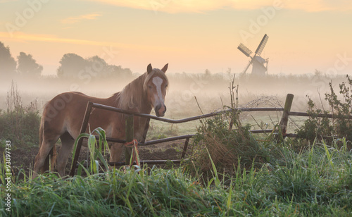 Poster Cappuccino Horse in a meadow near a windmill during a foggy, autumn sunrise. Groningen, Netherlands