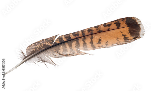 brown and orange striped feather