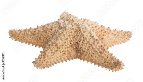 Obraz na plátně beige large starfish on white
