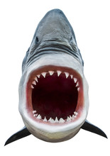 Model Of Shark With Open Mouth...