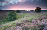 beautiful sunrise over hills with flowering heather - 93121716
