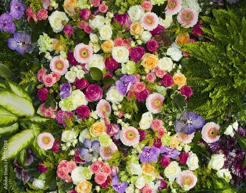 Photo  plantas y flores