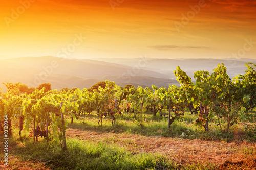 Deurstickers Oranje eclat Vineyard in Tuscany, Ripe grapes at sunset
