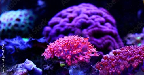 Poster Sous-marin Amazing Coral in Reef Aquarium