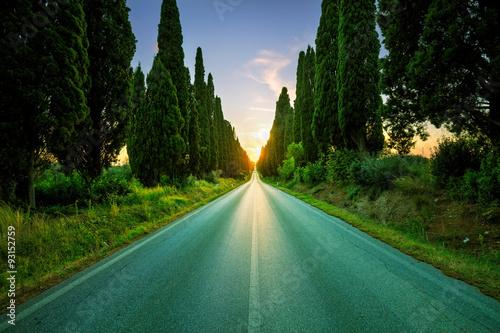 Leinwand Poster Bolgheri famous cypresses tree straight boulevard on backlight s