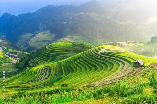 Garden Poster Rice fields Rice fields on terraced of Mu Cang Chai , Vietnam.