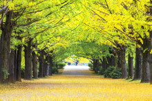 Yellow Autumn Color Adorns The...