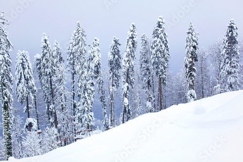 Poster Landschap Russian winter forest