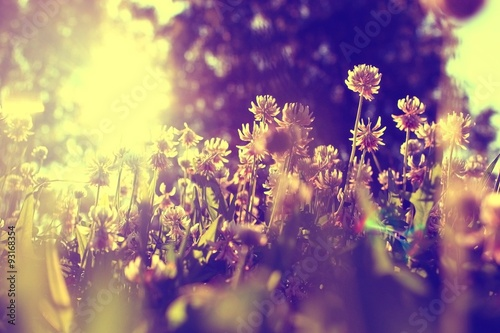 Fotobehang Zwavel geel summer landscape background sun flowers Rays