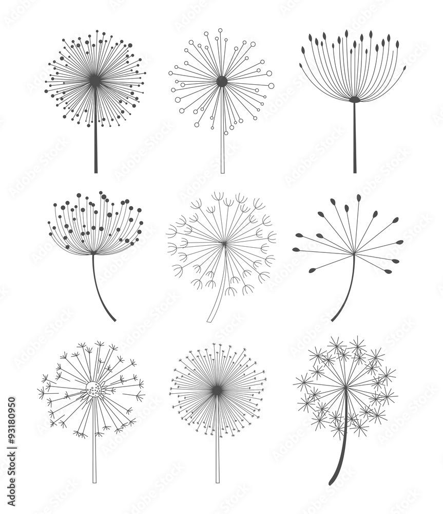 Fototapety, obrazy: Black and White Dandelions Set Vector Illustration