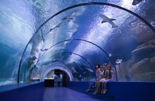 Family In A Water Tunnel