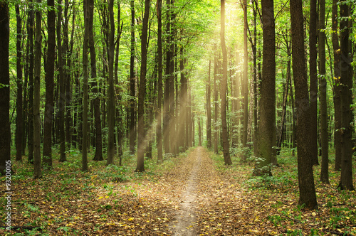 Fototapeten Wald Forest with sunlight