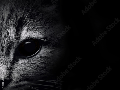dark muzzle cat close-up. front view Poster