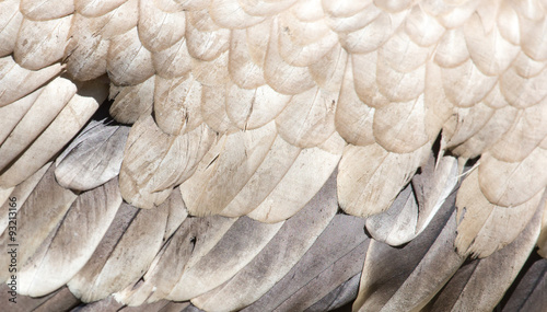 eagle feathers as a background