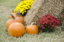 Holiday Or Seasonal Display With Pumpkins, Bales Of Hay And Colorful Flowers