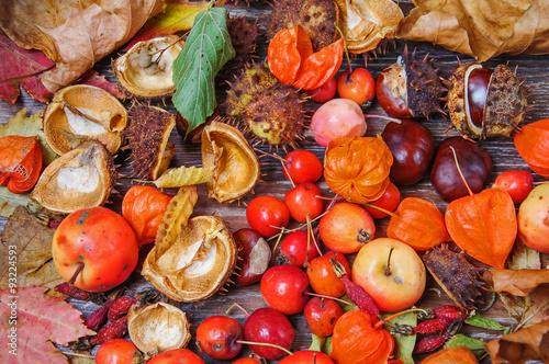Aluminium Prints Buffet, Bar Autumn leaves and fruits