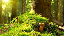 Mushroom In Green Moss.