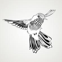 Hand Drawn Flying Humming Bird...