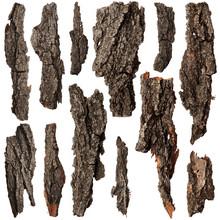 Set Of Bark Tree