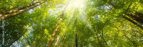 Fotografiet Wald Panorama mit Sonnenstrahlen - Banner