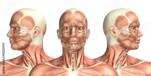 Fotografie, Tablou  3D male medical figure showing cervical rotation