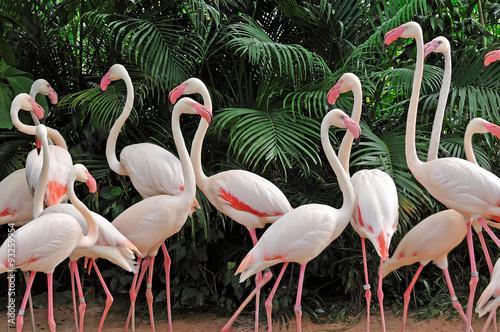 Cadres-photo bureau Flamingo Group of pink flamingos