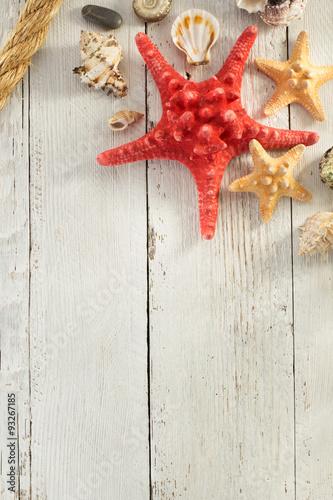 muszle-i-czerwona-rozgwiazda-na-drewnianym-tle