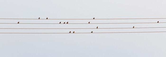 Ptasie Nuty