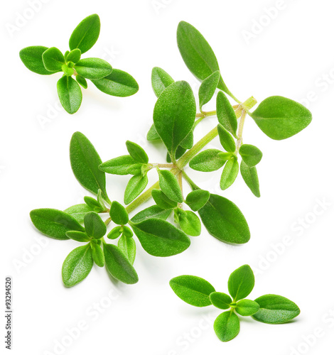 Fotografía  Thyme fresh herb isolated