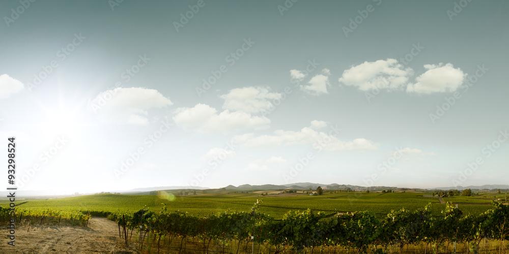 Fototapety, obrazy: napa valley