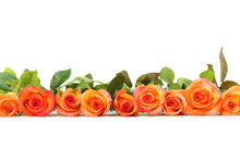 Bouquet Of Orange Roses On Whi...